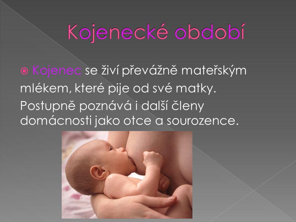 Kojenecké období Kojenec se živí převážně mateřským