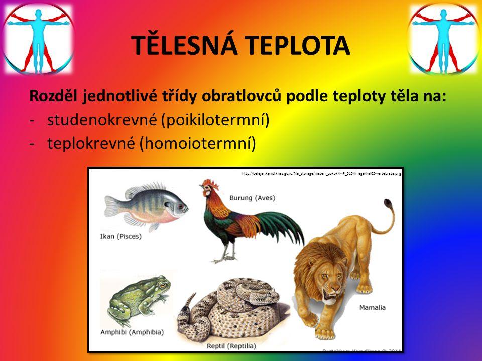 TĚLESNÁ TEPLOTA Rozděl jednotlivé třídy obratlovců podle teploty těla na: studenokrevné (poikilotermní)