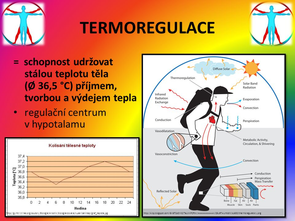 TERMOREGULACE = schopnost udržovat stálou teplotu těla (Ø 36,5 °C) příjmem, tvorbou a výdejem tepla.