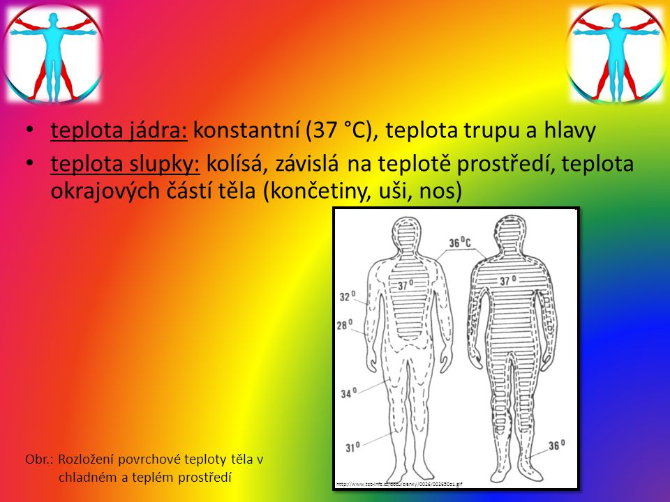 teplota jádra: konstantní (37 °C), teplota trupu a hlavy