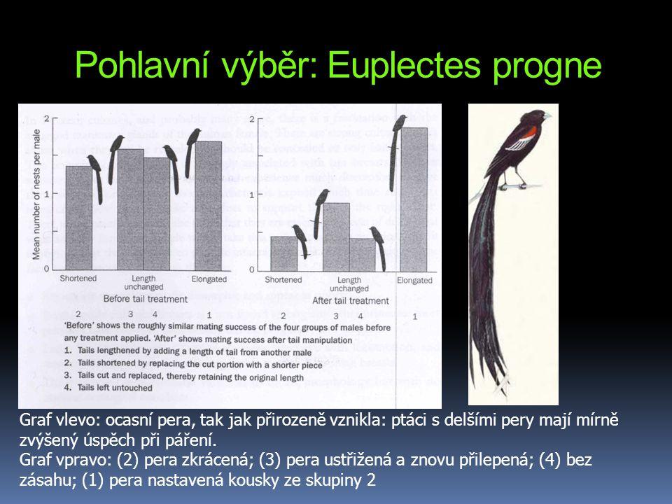 Pohlavní výběr: Euplectes progne