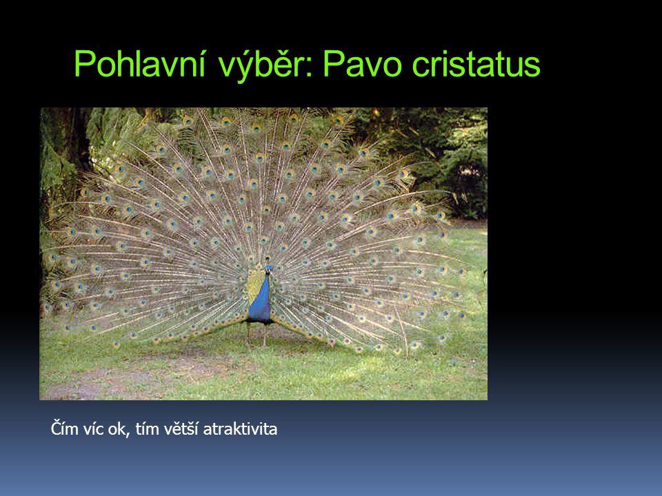 Pohlavní výběr: Pavo cristatus