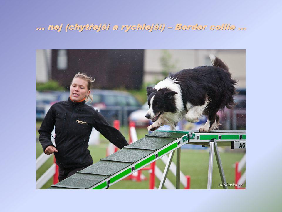 … nej (chytřejší a rychlejší) – Border collie …