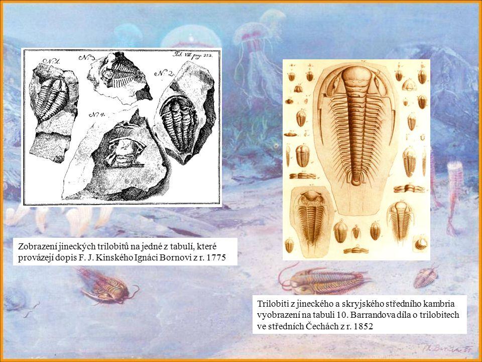 Zobrazení jineckých trilobitů na jedné z tabulí, které provázejí dopis F. J. Kinského Ignáci Bornovi z r. 1775