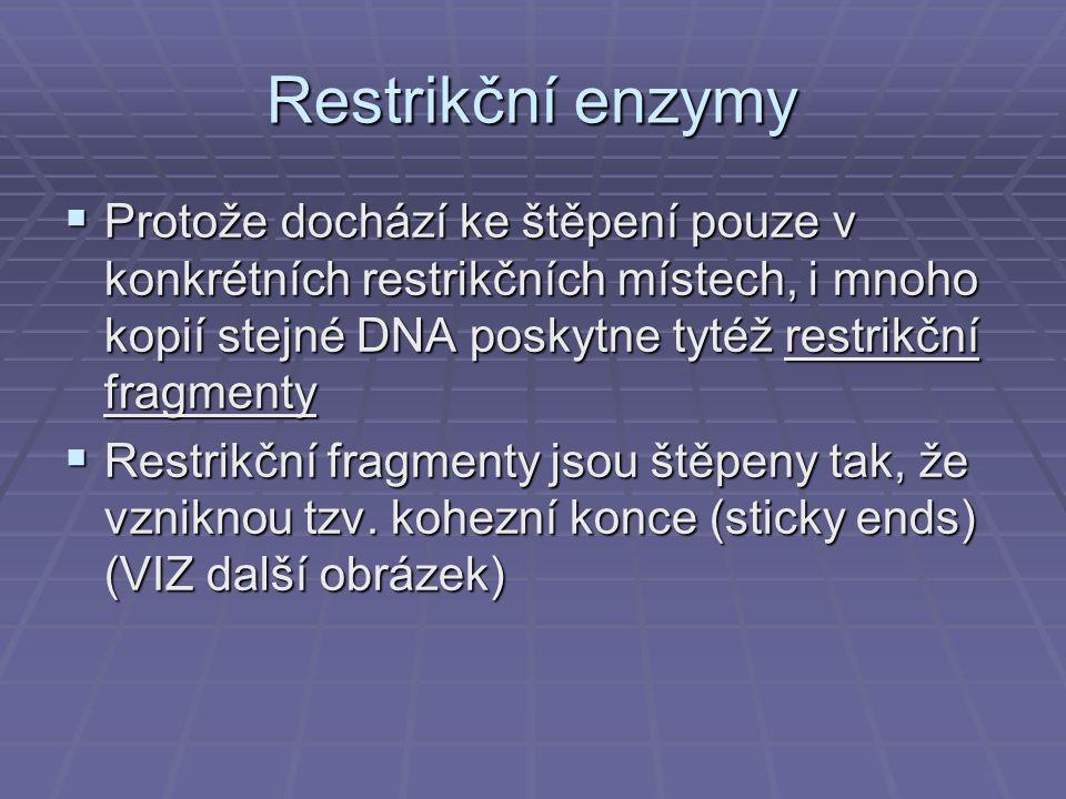 Restrikční enzymy Protože dochází ke štěpení pouze v konkrétních restrikčních místech, i mnoho kopií stejné DNA poskytne tytéž restrikční fragmenty.
