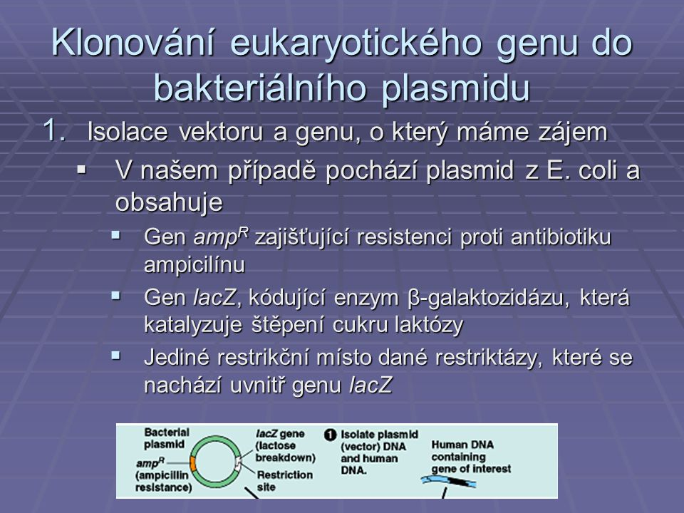 Klonování eukaryotického genu do bakteriálního plasmidu