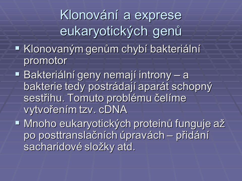 Klonování a exprese eukaryotických genů