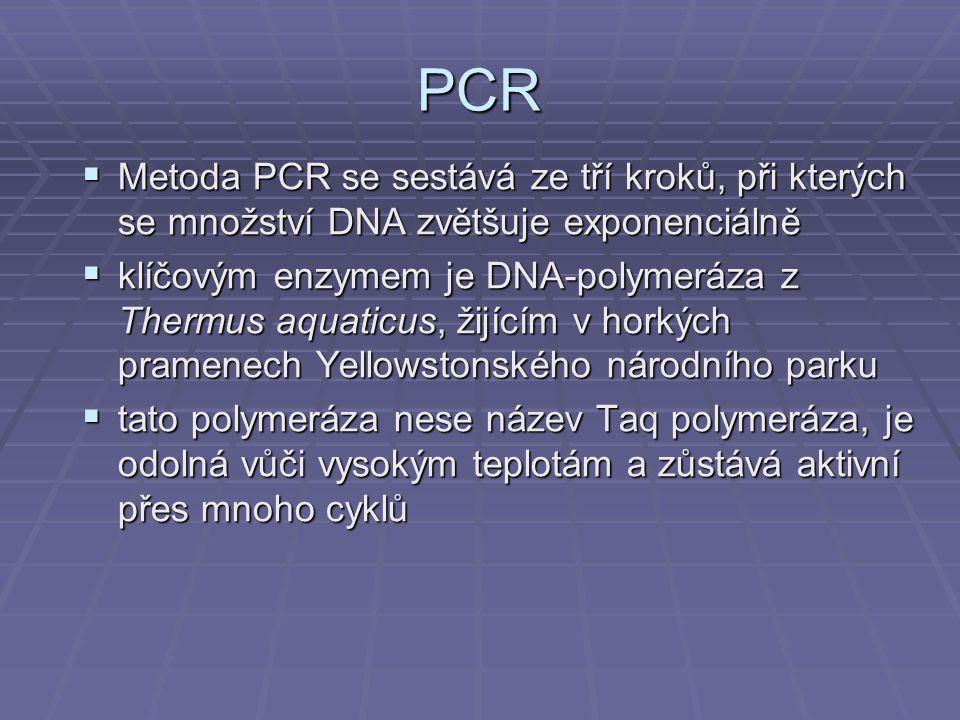 PCR Metoda PCR se sestává ze tří kroků, při kterých se množství DNA zvětšuje exponenciálně.