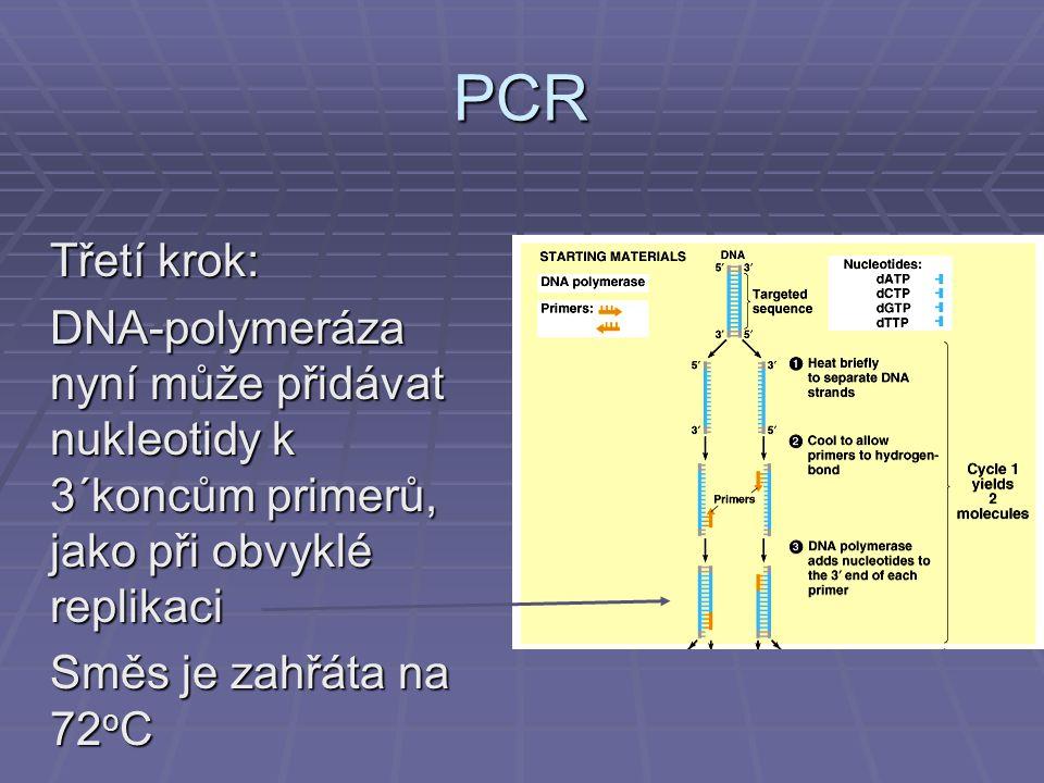 PCR Třetí krok: DNA-polymeráza nyní může přidávat nukleotidy k 3´koncům primerů, jako při obvyklé replikaci.