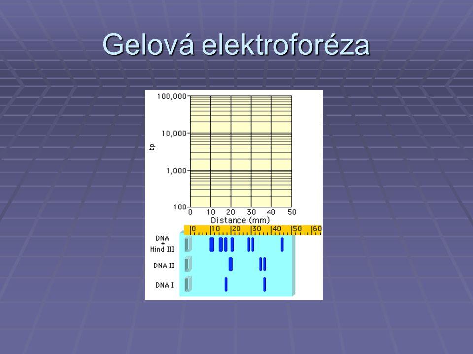 Gelová elektroforéza