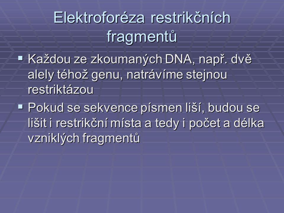 Elektroforéza restrikčních fragmentů