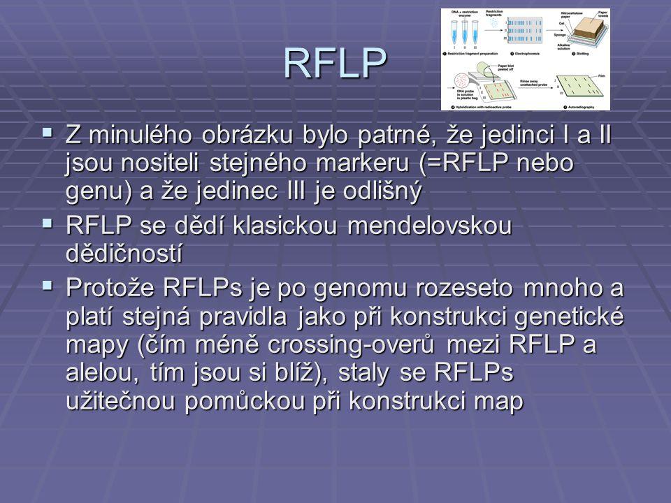 RFLP Z minulého obrázku bylo patrné, že jedinci I a II jsou nositeli stejného markeru (=RFLP nebo genu) a že jedinec III je odlišný.