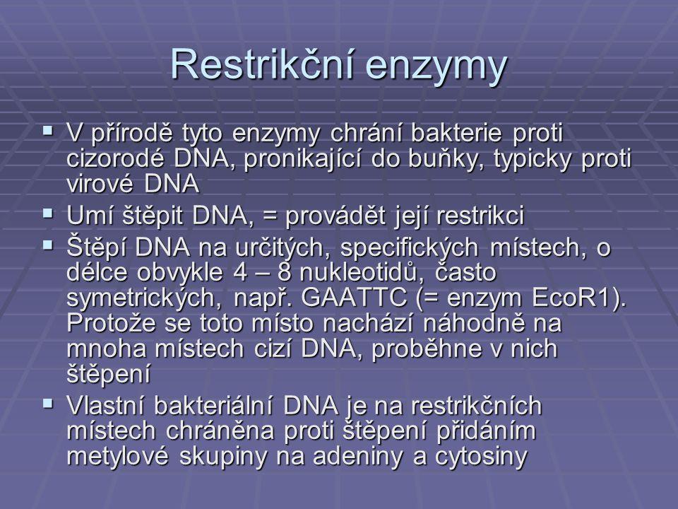 Restrikční enzymy V přírodě tyto enzymy chrání bakterie proti cizorodé DNA, pronikající do buňky, typicky proti virové DNA.