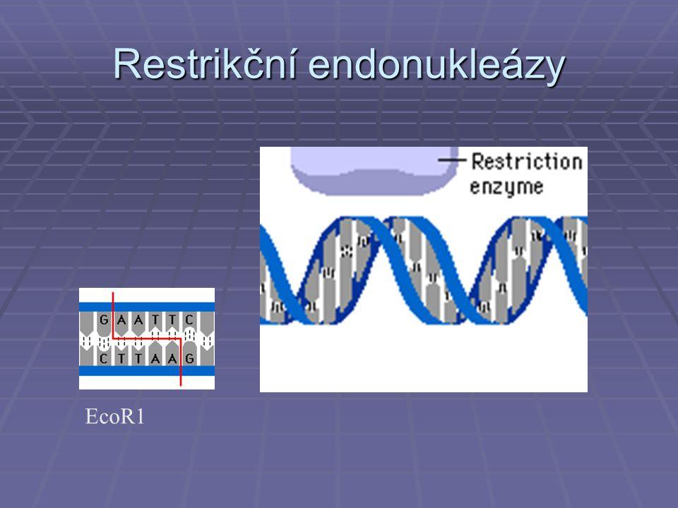 Restrikční endonukleázy