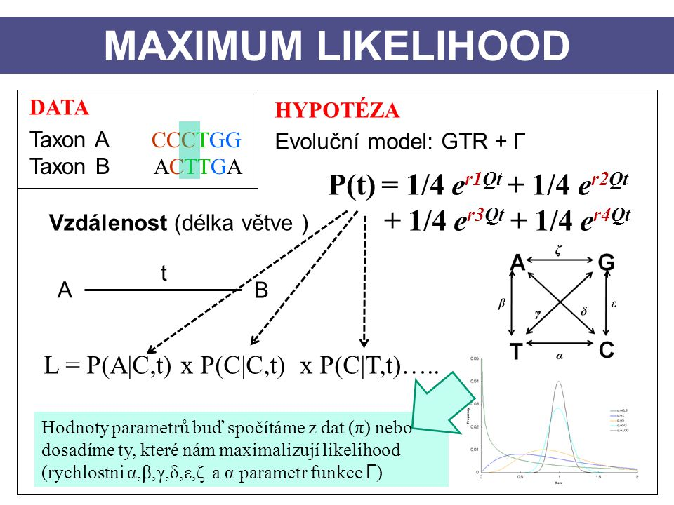 MAXIMUM LIKELIHOOD P(t) = 1/4 er1Qt + 1/4 er2Qt