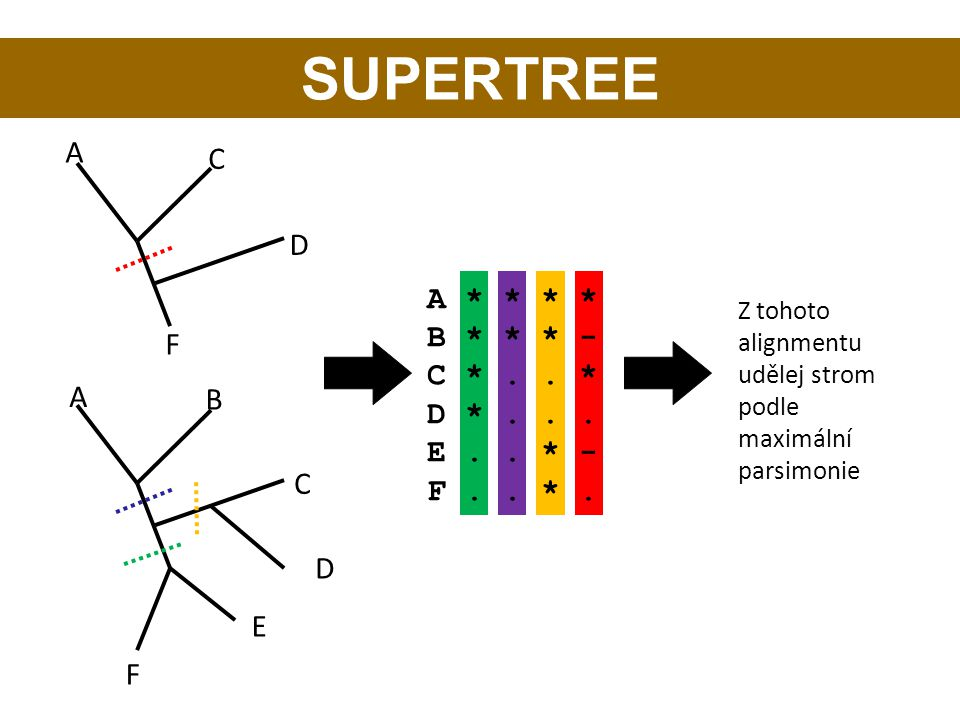 SUPERTREE A C D A * * * * B * * * - C * . . * D * . . . F E . . * -