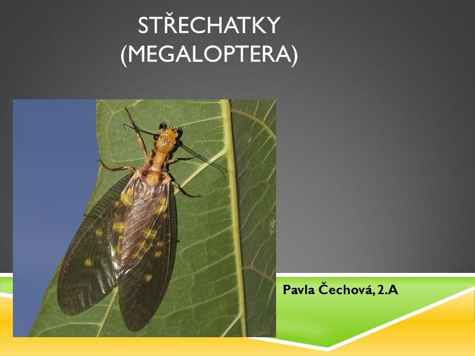 Střechatky (megaloptera)