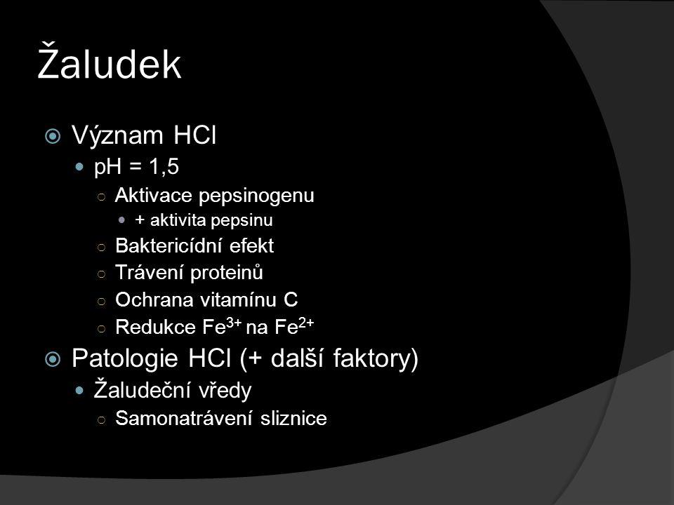 Žaludek Význam HCl Patologie HCl (+ další faktory) pH = 1,5