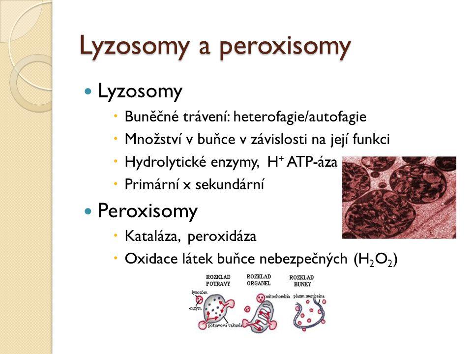 Lyzosomy a peroxisomy Lyzosomy Peroxisomy