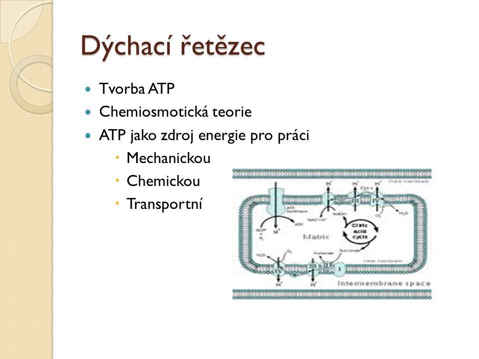 Dýchací řetězec Tvorba ATP Chemiosmotická teorie