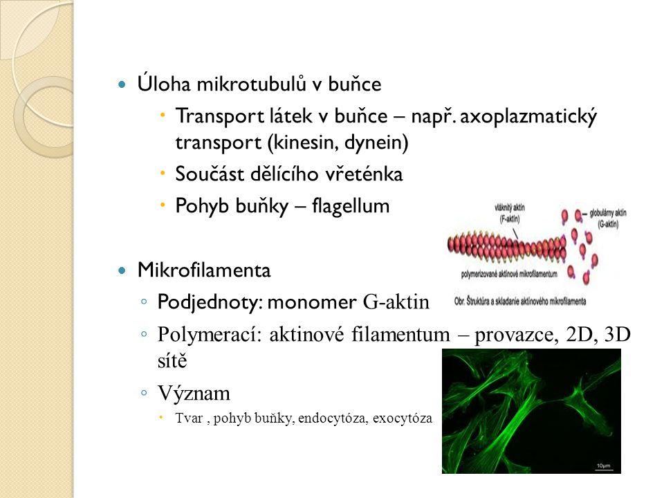 Úloha mikrotubulů v buňce