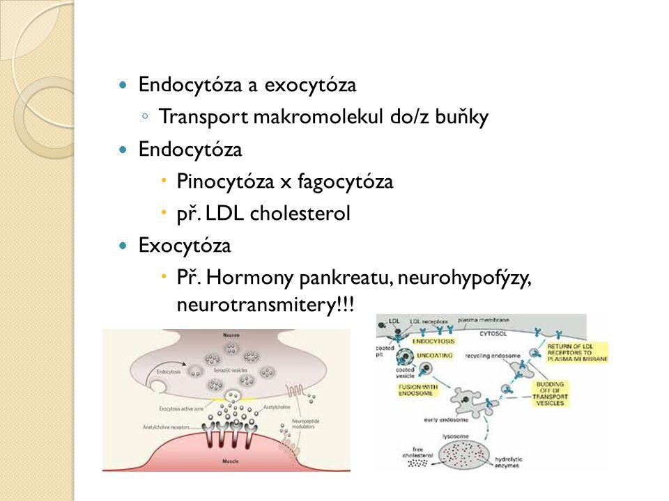Endocytóza a exocytóza