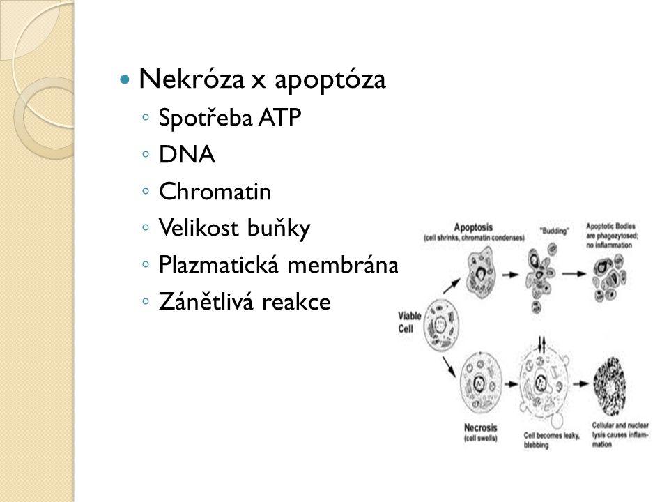 Nekróza x apoptóza Spotřeba ATP DNA Chromatin Velikost buňky
