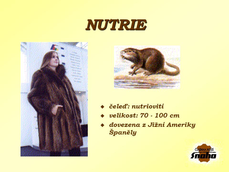 NUTRIE čeleď: nutriovití velikost: 70 - 100 cm