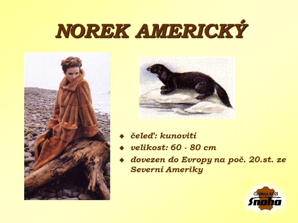 NOREK AMERICKÝ čeleď: kunovití velikost: 60 - 80 cm