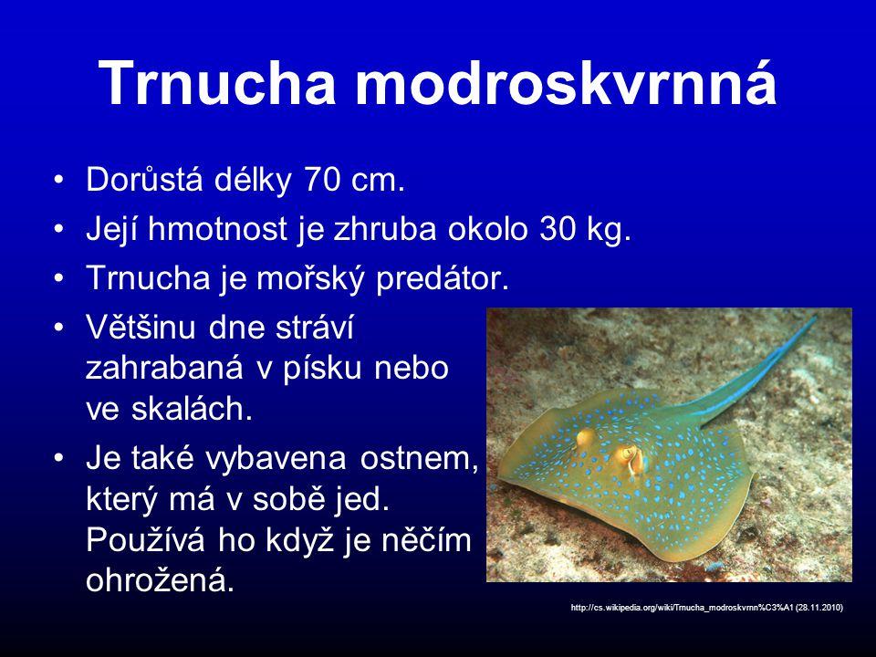 Trnucha modroskvrnná Dorůstá délky 70 cm.