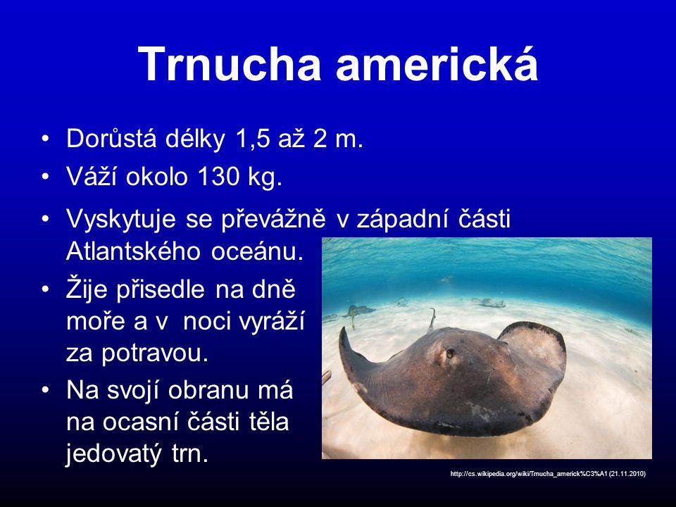 Trnucha americká Dorůstá délky 1,5 až 2 m. Váží okolo 130 kg.