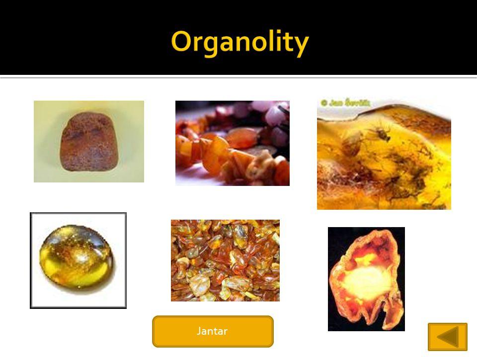 Organolity Jantar