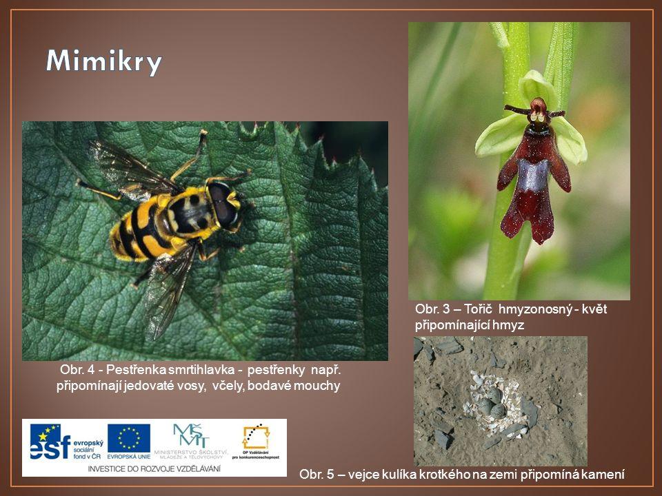 Mimikry Obr. 3 – Tořič hmyzonosný - květ připomínající hmyz