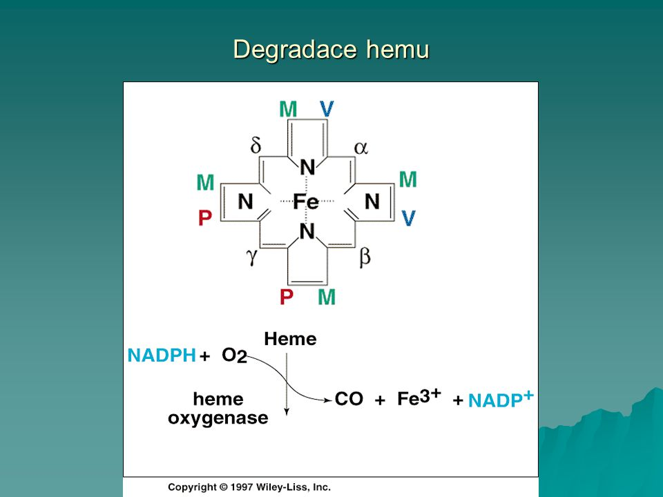 Degradace hemu