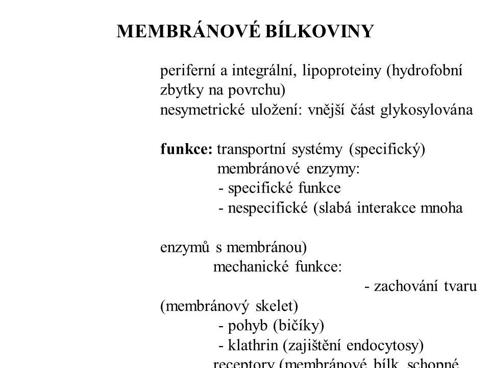 MEMBRÁNOVÉ BÍLKOVINY periferní a integrální, lipoproteiny (hydrofobní zbytky na povrchu) nesymetrické uložení: vnější část glykosylována.