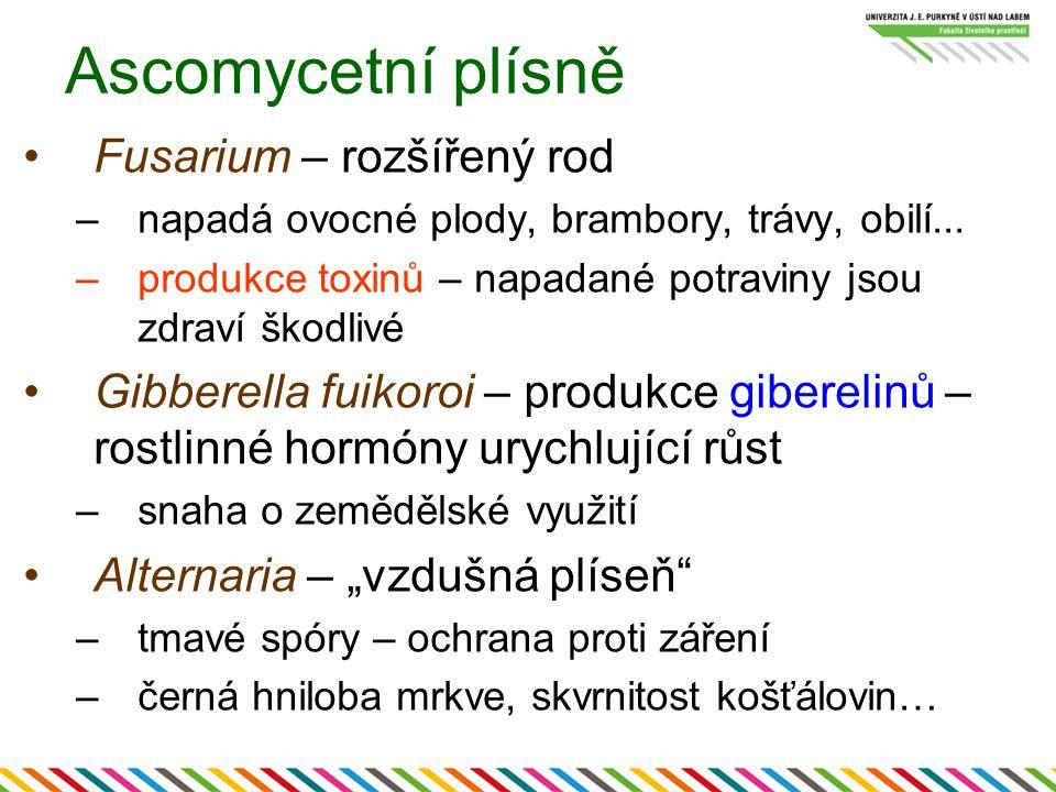 Ascomycetní plísně Fusarium – rozšířený rod