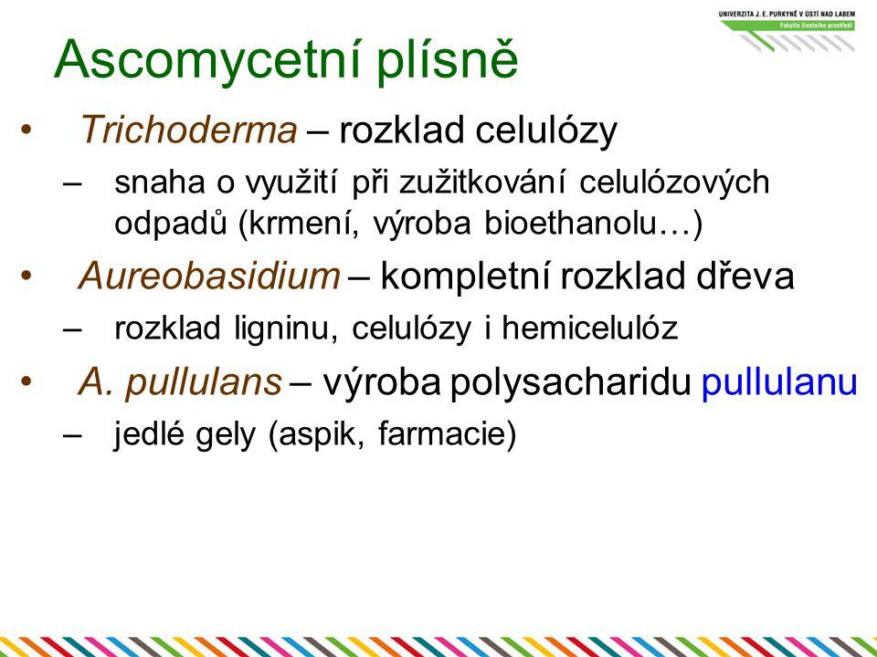 Ascomycetní plísně Trichoderma – rozklad celulózy