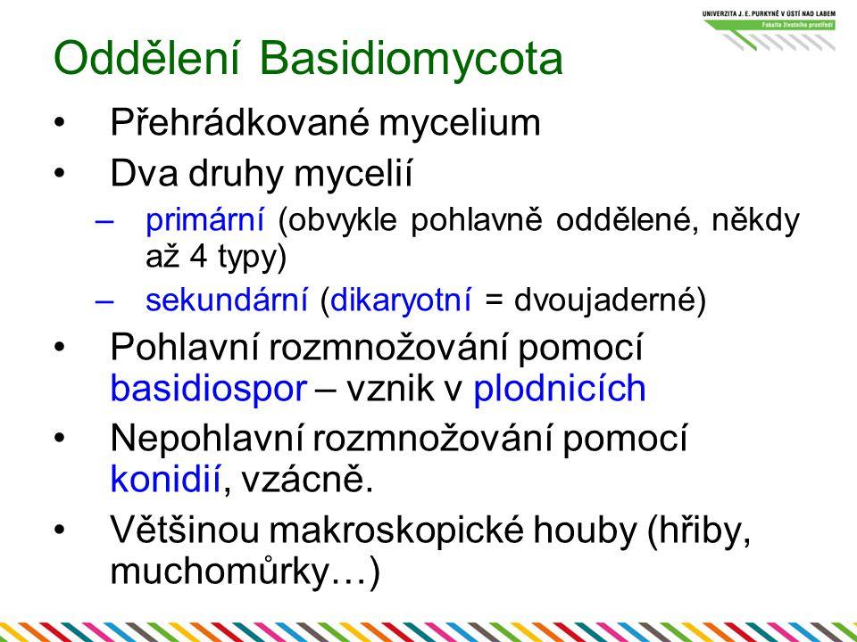 Oddělení Basidiomycota