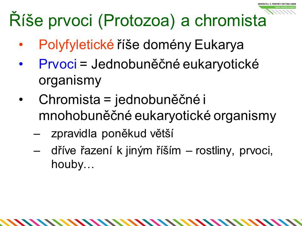 Říše prvoci (Protozoa) a chromista
