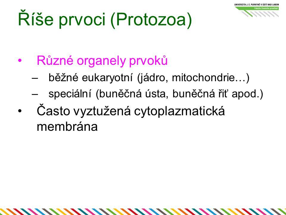 Říše prvoci (Protozoa)