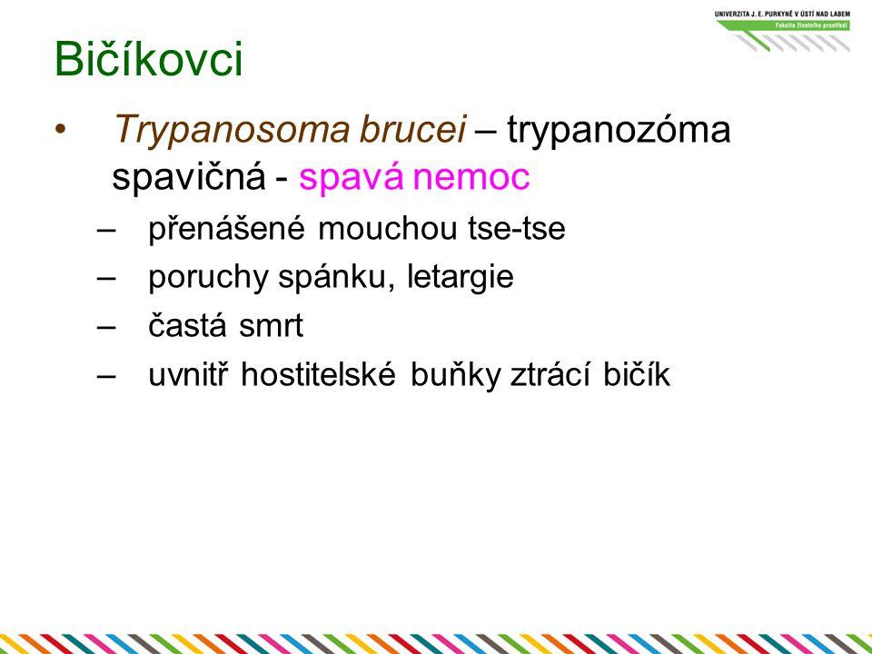 Bičíkovci Trypanosoma brucei – trypanozóma spavičná - spavá nemoc