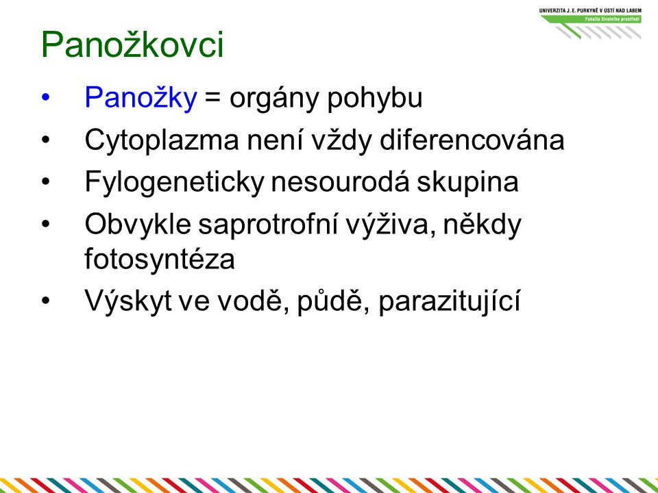 Panožkovci Panožky = orgány pohybu Cytoplazma není vždy diferencována