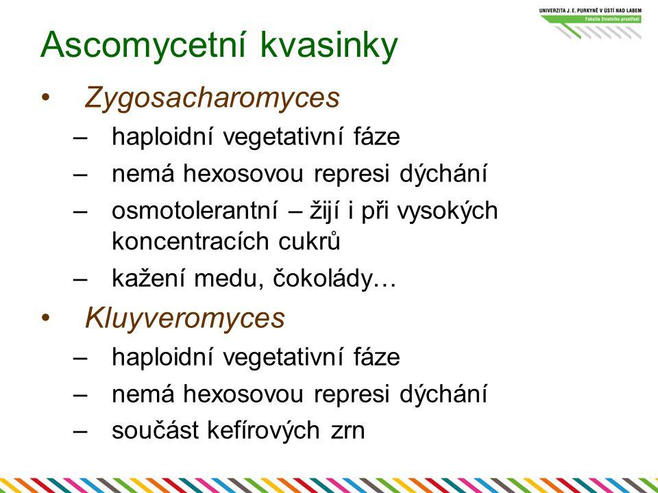 Ascomycetní kvasinky Zygosacharomyces Kluyveromyces
