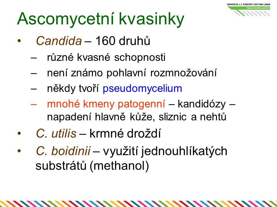 Ascomycetní kvasinky Candida – 160 druhů C. utilis – krmné droždí