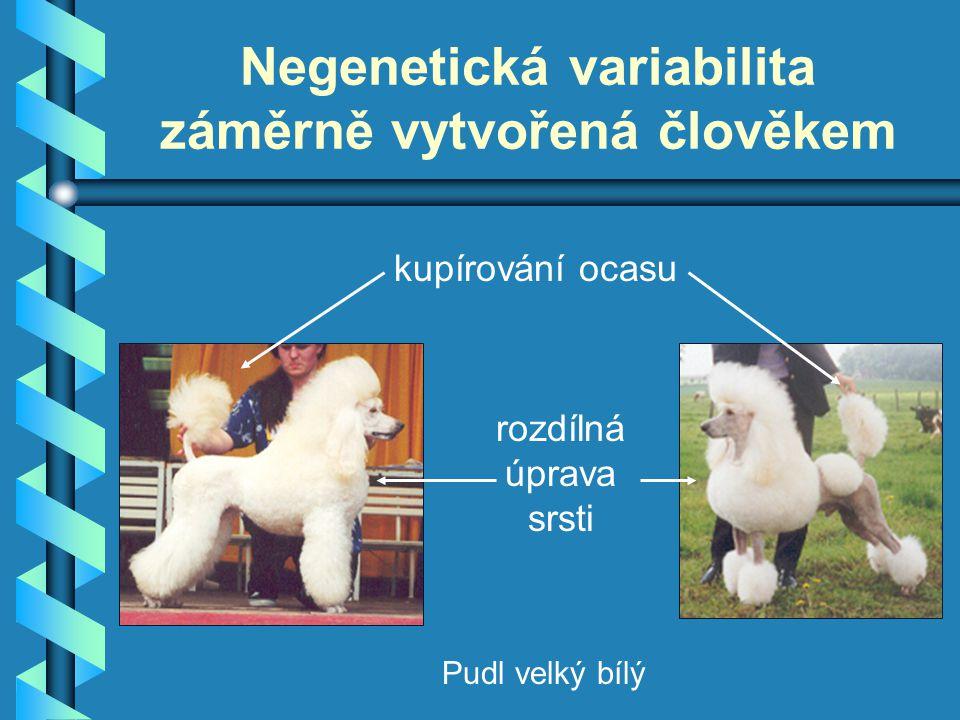 Negenetická variabilita záměrně vytvořená člověkem