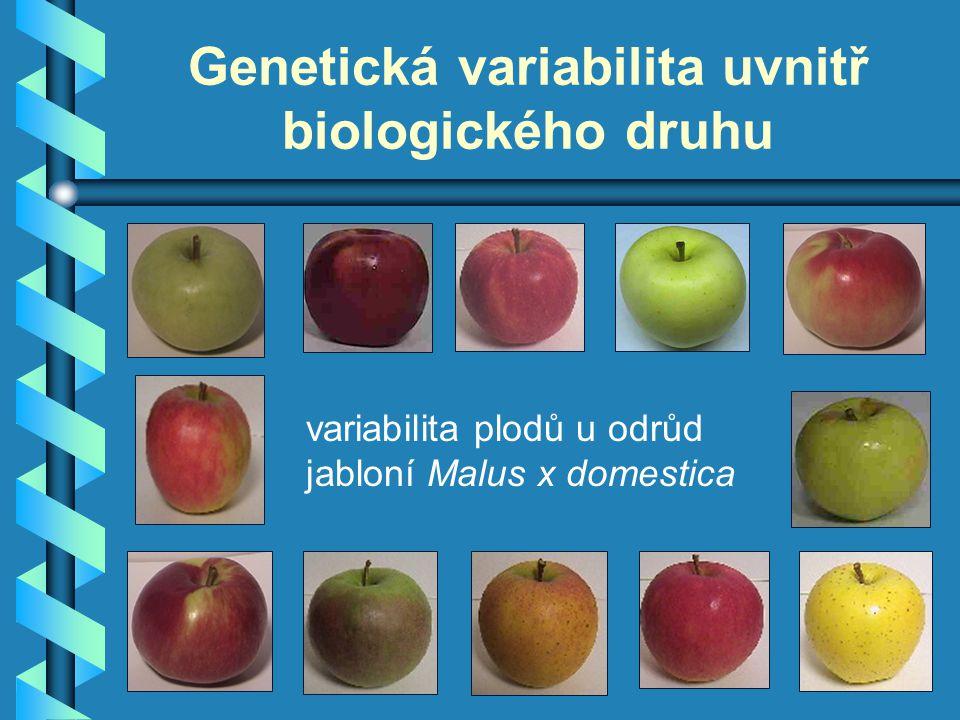 Genetická variabilita uvnitř biologického druhu