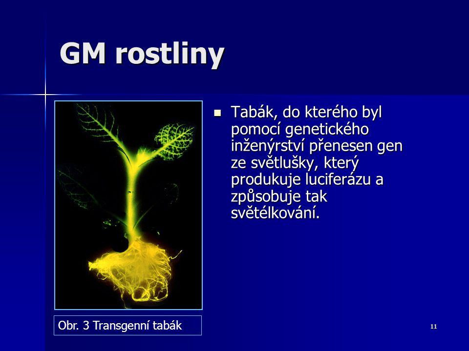 GM rostliny Tabák, do kterého byl pomocí genetického inženýrství přenesen gen ze světlušky, který produkuje luciferázu a způsobuje tak světélkování.