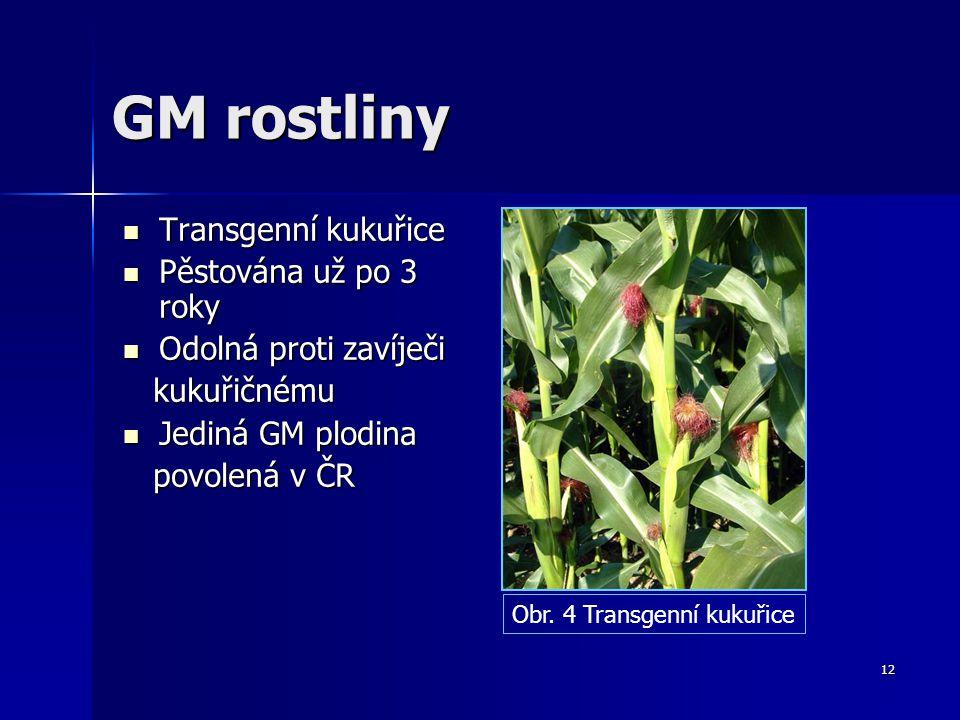 GM rostliny Transgenní kukuřice Pěstována už po 3 roky