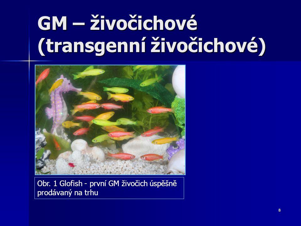 GM – živočichové (transgenní živočichové)