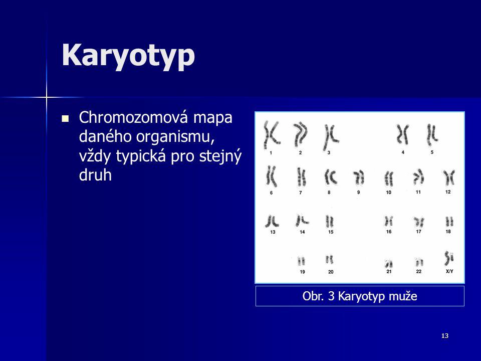 Karyotyp Chromozomová mapa daného organismu, vždy typická pro stejný druh Obr. 3 Karyotyp muže